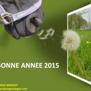 annee-2015b