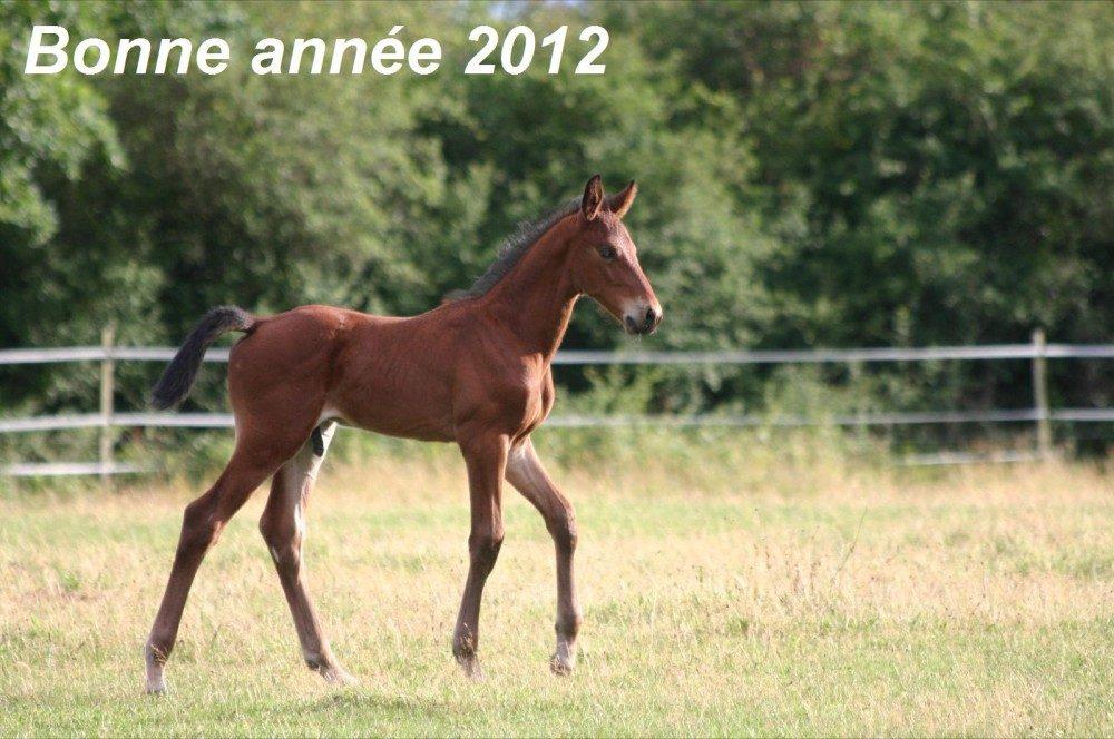 bonne_annee-2012