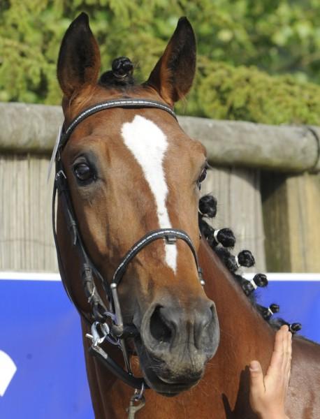 Top Fontaine - 4ème de la sélection des 2 ans Cluny 2009