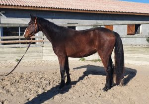 chevaux à vendre: nouvelles vidéos